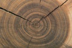Древесина зерна конца Стоковая Фотография