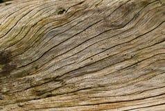 древесина зерна Стоковая Фотография RF