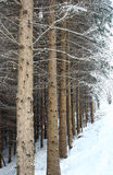 древесина зимы предпосылки Стоковые Фото