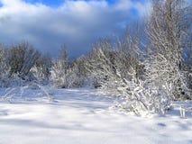 древесина зимы стоковое изображение rf