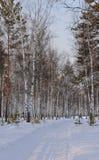 древесина зимы Стоковые Изображения
