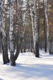 древесина зимы Стоковые Изображения RF