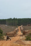 древесина индустрии Стоковое Изображение RF