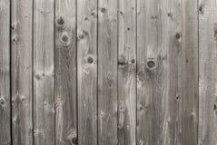 Древесина лиственницы Стоковая Фотография