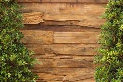 Древесина и заводы стены Стоковые Фотографии RF