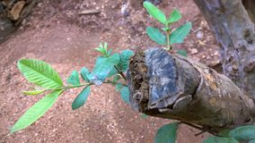 Древесина и листья Стоковые Изображения