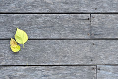 Древесина и листья Стоковые Фотографии RF