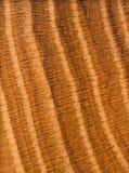 древесина картины дуба твёрдой древесины зерна доски твердая Стоковое Фото
