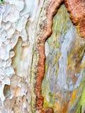 Древесина корки Стоковое Фото