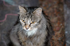 древесина кота стоковые фото