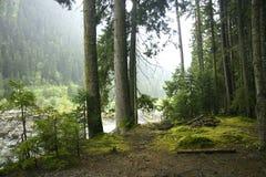 древесина края Стоковое Фото