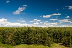 древесина края Стоковое Изображение