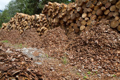 древесина кучи журналов Стоковое Фото