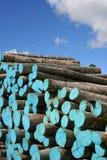 древесина кучи Стоковые Изображения RF