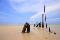 древесина моря туши стоковые изображения rf