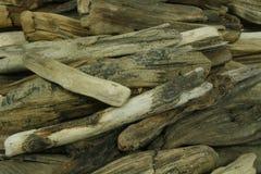древесина моря Стоковые Фото