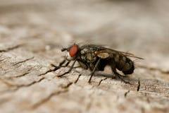 древесина мухы Стоковое Фото