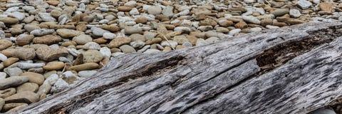 Древесина на каменистом пляже стоковые фотографии rf