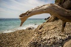 Древесина на пляже Стоковое Изображение