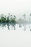 древесина озера тумана свободного полета Стоковые Фото