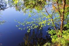 древесина озера Стоковая Фотография
