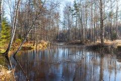 Древесина осени в солнечной погоде на реке Стоковые Изображения