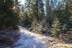 Древесина осени в солнечной погоде Стоковые Фотографии RF