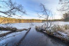 Древесина осени в солнечной погоде стоковые изображения rf