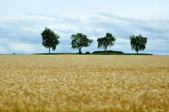 Древесина осени лета ландшафта неба леса дерева поля Стоковые Фото