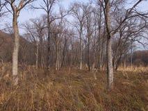 Древесина осени нагая Стоковое Изображение RF