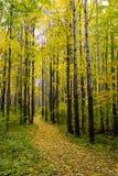 древесина осени Стоковая Фотография RF