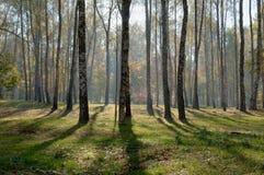 древесина осени Стоковое Изображение RF