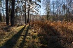 Древесина осени Стоковое Изображение
