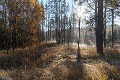 Древесина осени Стоковое фото RF