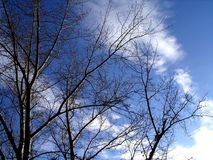 древесина осени Стоковые Фото