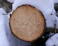 Древесина отрезанная в снеге Стоковые Фотографии RF