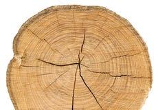 древесина отрезанная предпосылкой белая Стоковое фото RF