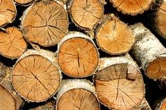 древесина пожара березы Стоковое Изображение