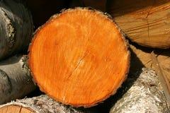 древесина пожара ольшаника Стоковые Изображения RF