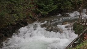 Древесина потока горы весной сток-видео