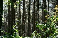 Древесина 1379 полигона Стоковое фото RF