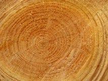 древесина предпосылки свеже спиленная стоковая фотография rf