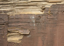древесина предпосылки старая Стоковая Фотография