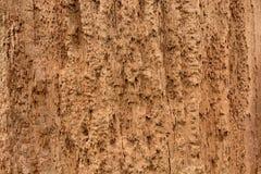 Древесина предпосылки тухлая Стоковые Фото