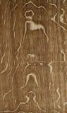 древесина раздела европейского дуба радиальная Стоковые Изображения