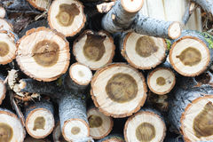 Древесина режет предпосылку года сбора винограда природы Стоковое Изображение