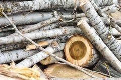 Древесина режет предпосылку года сбора винограда природы Стоковая Фотография