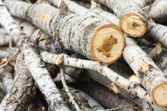 Древесина режет предпосылку года сбора винограда природы Стоковые Фото