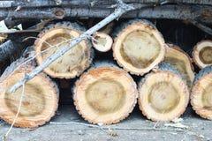 Древесина режет предпосылку года сбора винограда природы Стоковое Фото