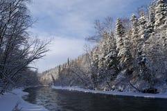 древесина реки стоковая фотография